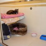 Glyndale Cattery - uPVC Chalets for Cats