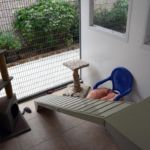 Glyndale Cattery - Exercise area for each cat