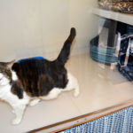 Glyndale Cattery - Spacious uPVC accommodation for your cat