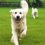 Glyndale Kennels and Cattery - Premium care for Dogs